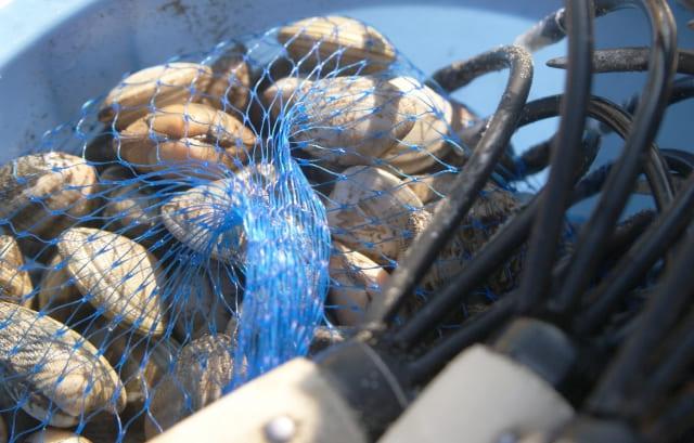 潮干狩り 道具 自作